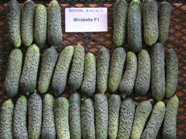 agurkų sėklos mirabele