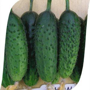 agurkų sėklos monisia